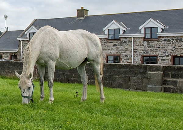 Horse outside Mill Road Self Catering Holiday Home Kilmore Quay Wexford